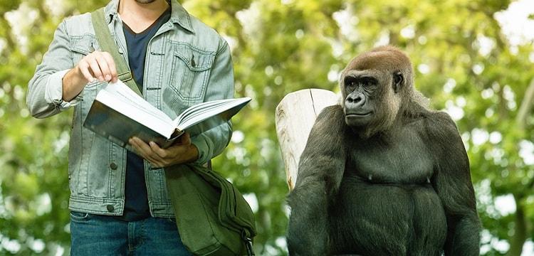 L'évolution du style littéraire